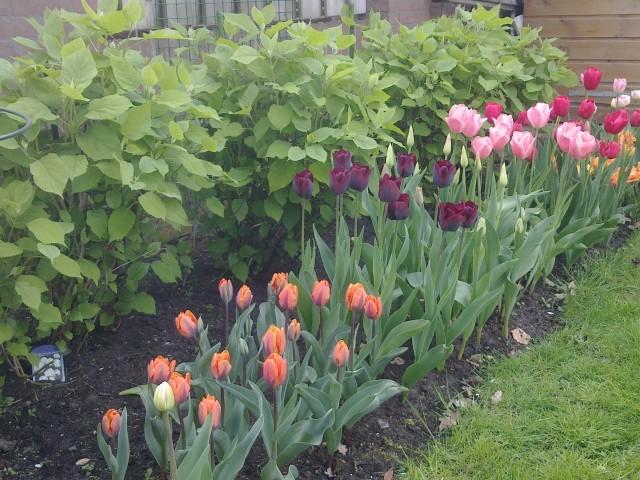 Open tuinen en Kunstroute Dongen